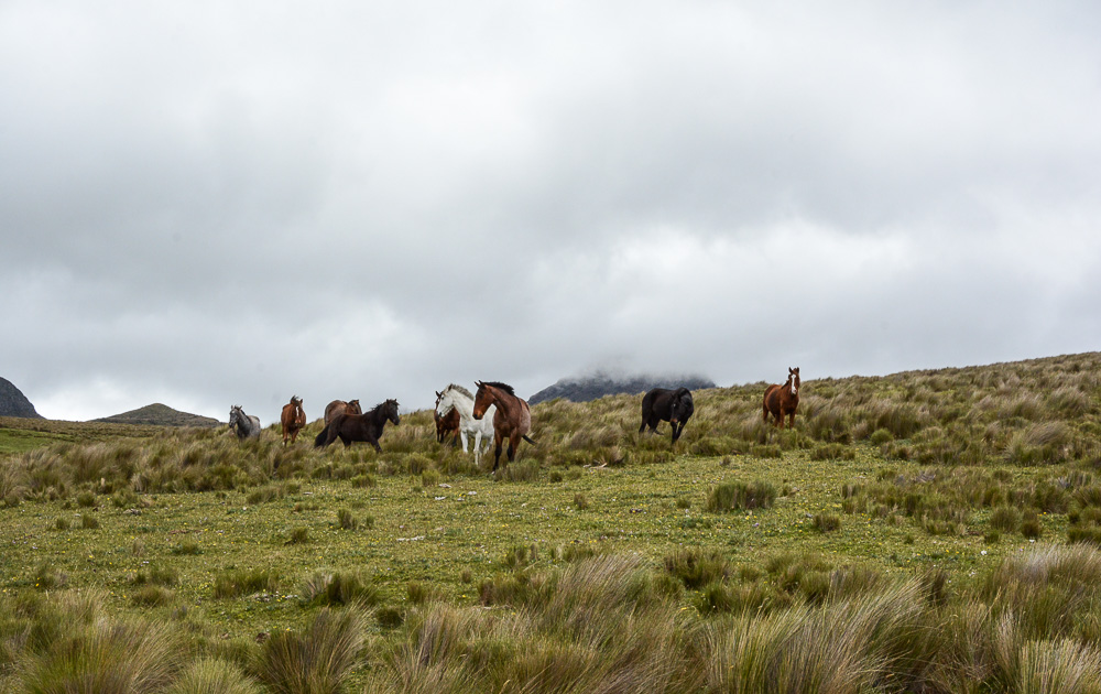 Traveling the World Ecuador Anden Cotopaxi Nationalpark Hacienda El Porvenir Horses