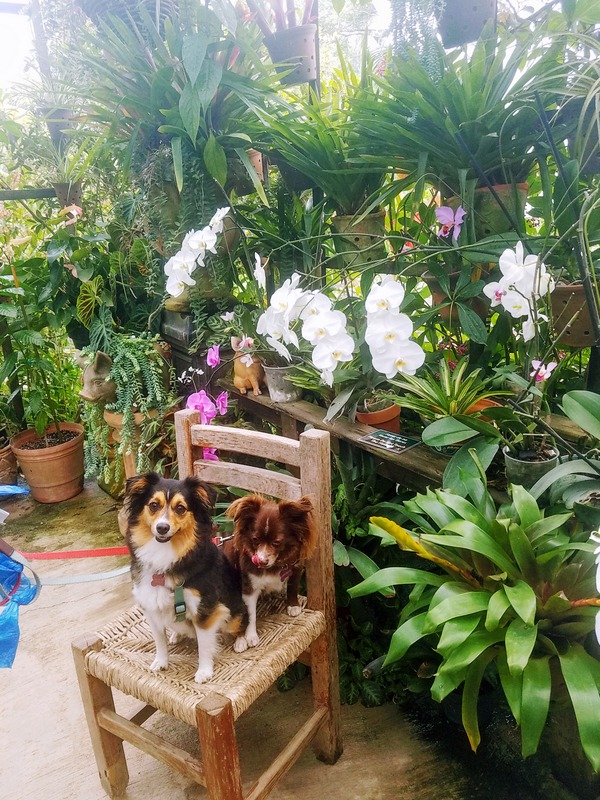 Pet Friendly Botanical Gardens in Puerto Vallarta Mexico