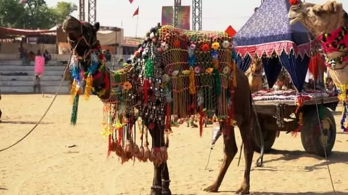Pushkar Camel Festival min 678x380 - Places To Visit Jaipur