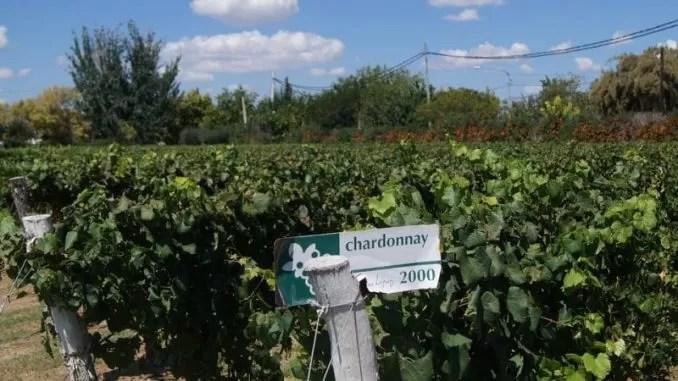 Vineyard Mendoza Wine Chardonnay e1545994445165 678x381 - Wine Tourism - Mendoza, Rivers of Wine in Argentina