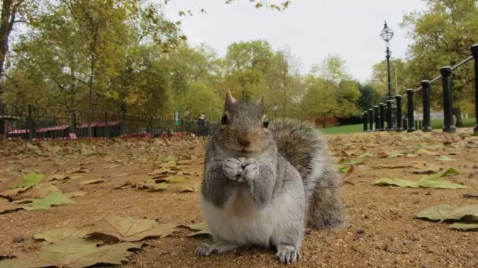 grey squirrel 678x381 - 5 Must-See Places To Visit During A Weekend Aventure In London