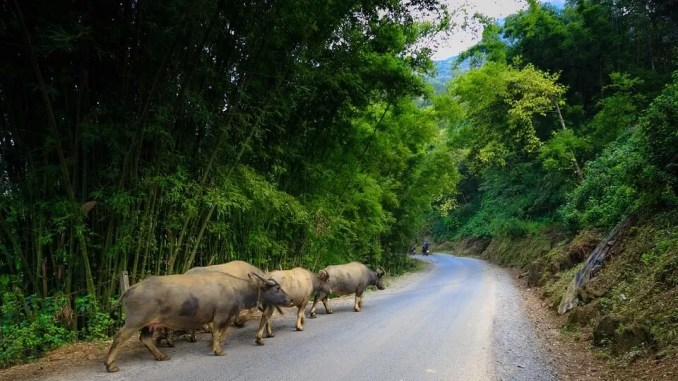 Road to cat cat village Sapa 678x381 - A Four Day Trip in Vietnam Sapa
