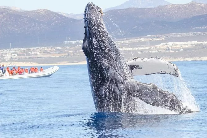 Los Cabos whale watching tour - 19 Best Vacation Destinations With Family Around The World
