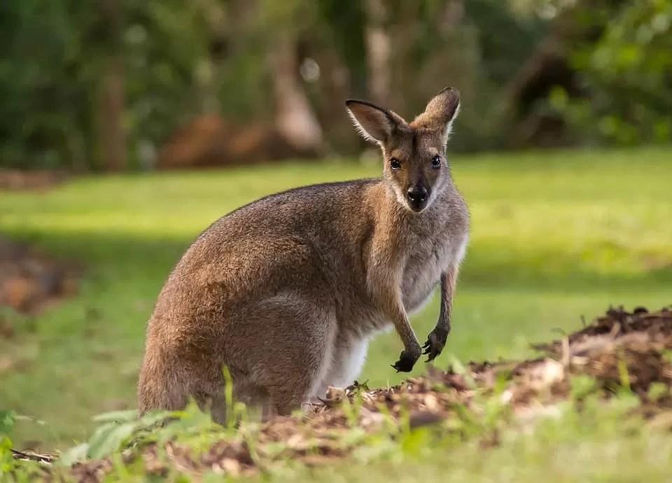 Tourist Destinations In Queensland, Australia