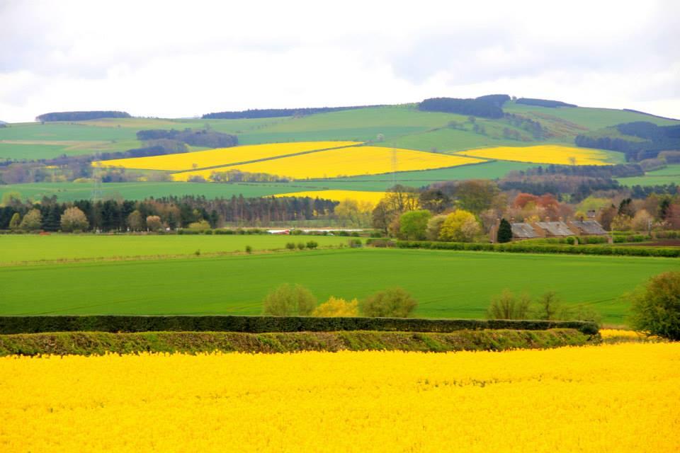 Beautiful Scottish Lowland