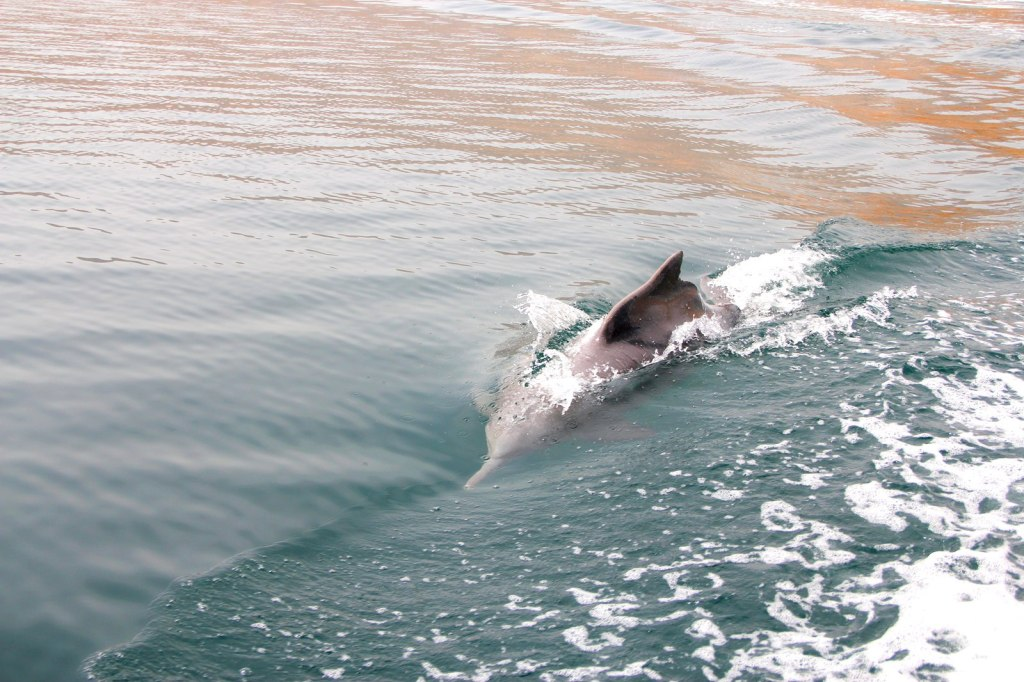 Free Roaming Dolphins