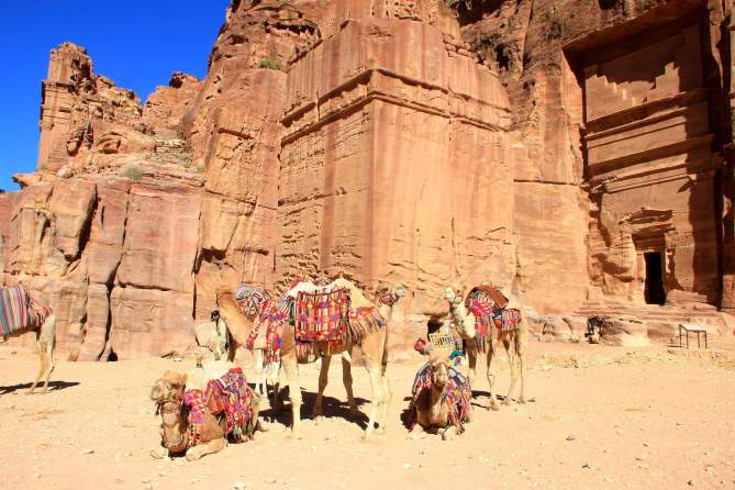 The camels looked so bored! :-(