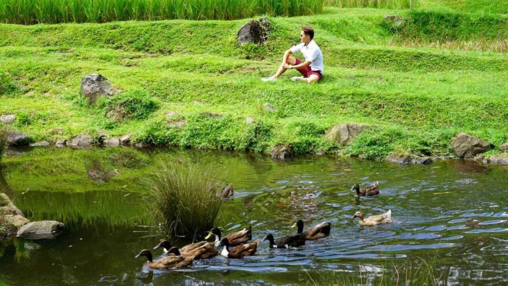 Lake Dusan Bambu