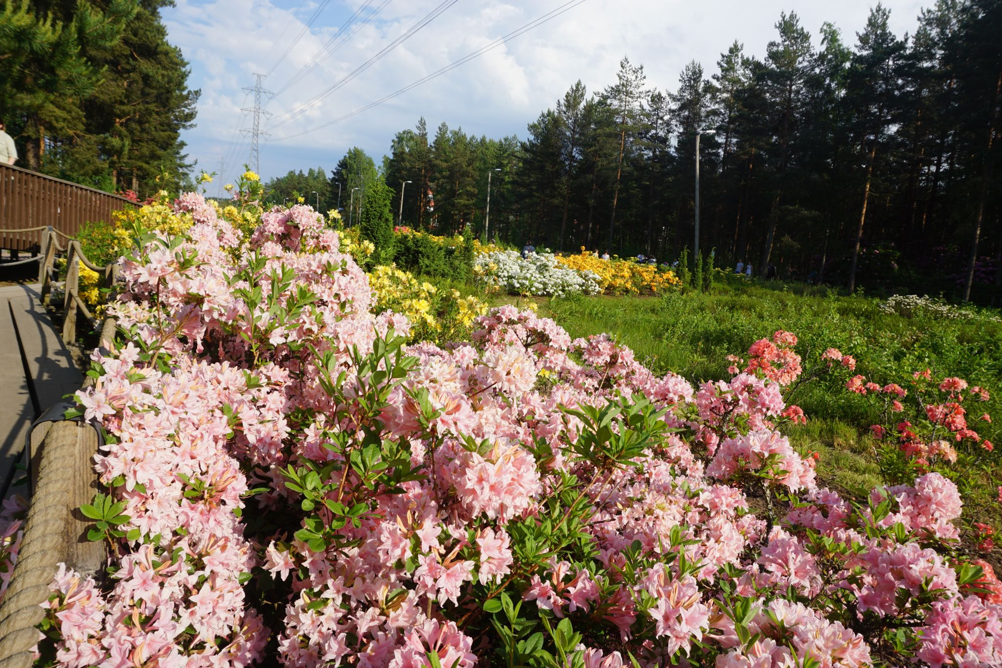 Visiting the Rhododendron Park in Helsinki