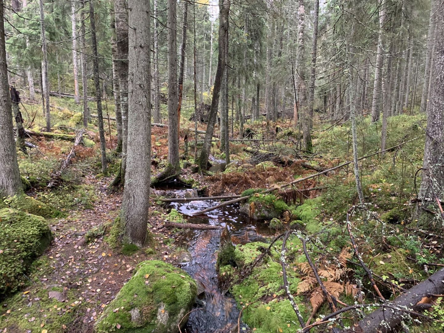 Easy hikes in Espoo, where to go