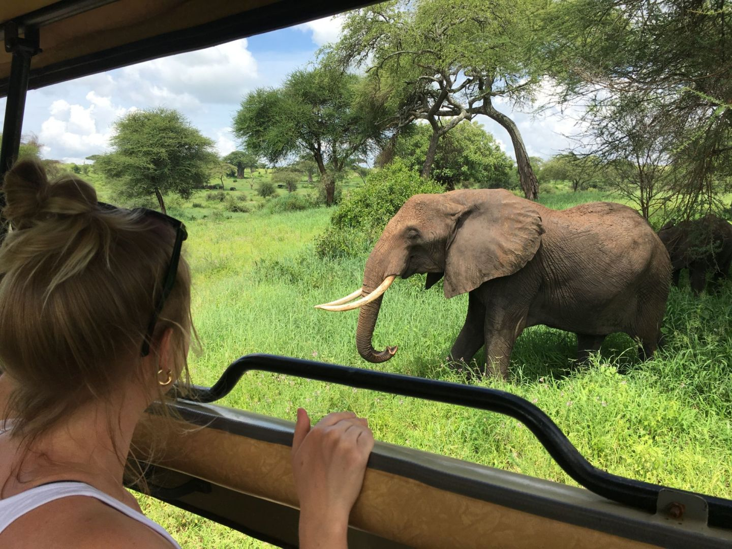 Seeing elephants in Tarangire National Park on safari