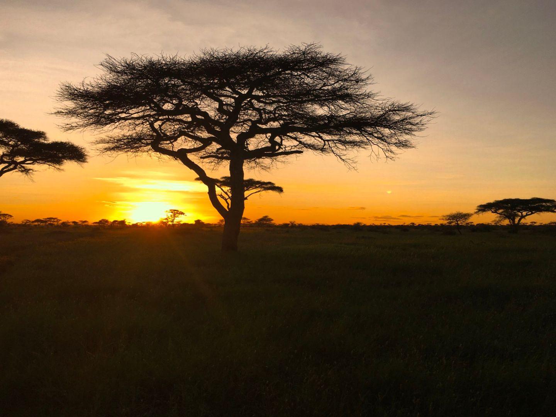 Travel Diary: Exploring the Endless Plains of the Serengeti