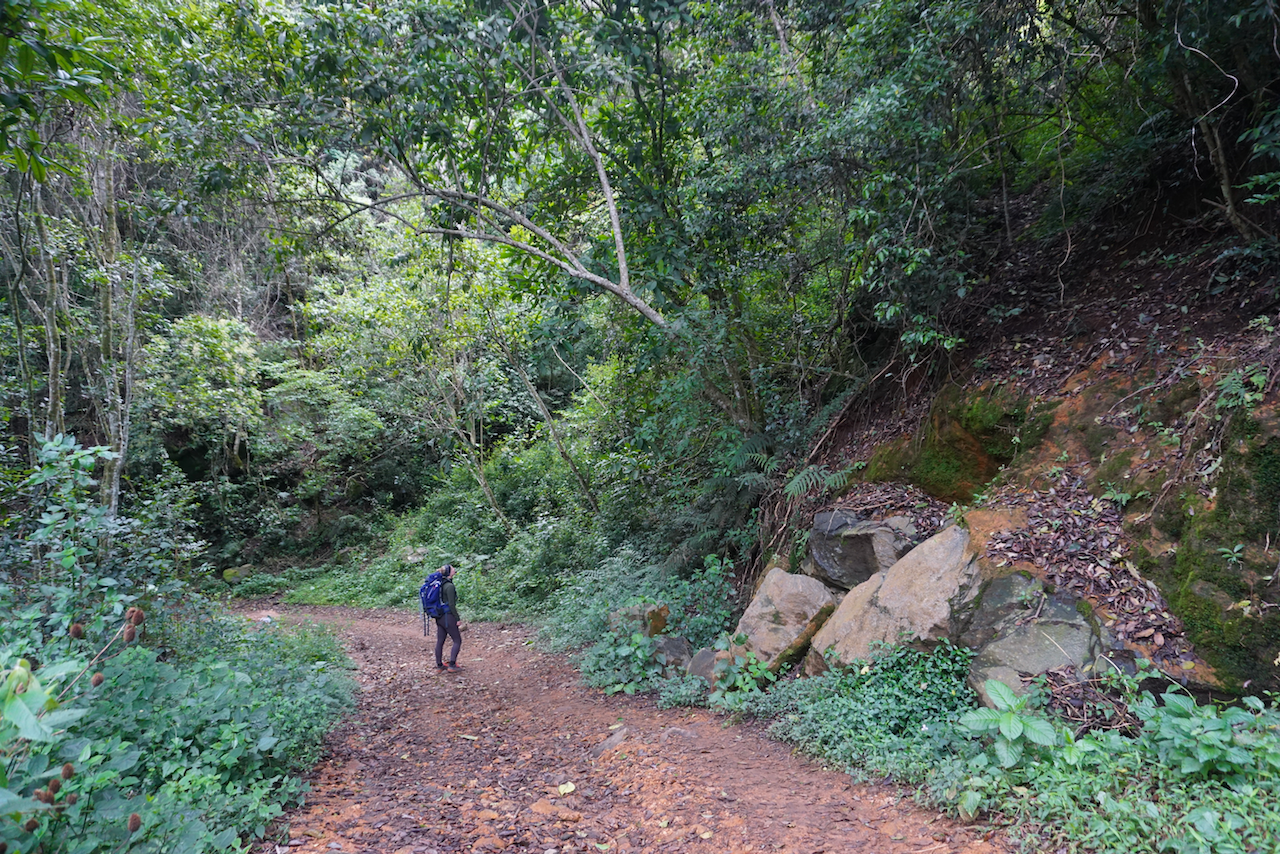 Travel Jael looking for black-and-white colobus monkeys in the Usambara Mountains in Tanzania
