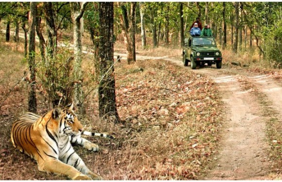 JIM CORBETT NATIONAL PARK Travel Guide: क्या करें, क्या न करें