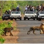Rajaji National Park, Rishikesh, Uttarakhand, Tickets and Entries,, Uttarakhand Tourism Development Board, Jungle Safari, Shivaliks, Rajaji, Motichur and Chila, Chilla Barrage, Pashulok Barrage, Jhilmil Jheel