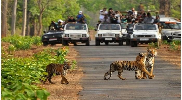 Rajaji National Park, ऋषिकेशः क्या करें, कैसे जाएं? Tickets और Entries की जानकारी