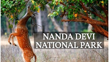 Nanda Devi and Valley of Flowers National Parks, Nanda Devi National Park Trekking, Nanda Devi National Park Trek Route, How to Reach Nanda Devi National Park, Nanda Devi National Park Photos