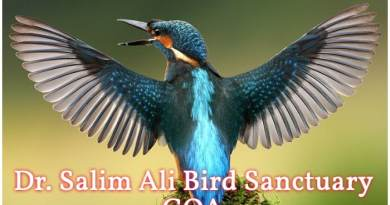 Dr. Salim Ali Bird Sanctuary, Dr. Salim Ali Bird Sanctuary Full Information, Goa Travel Guide, How to visit Dr. Salim Ali Bird Sanctuary, Dr. Salim Ali Bird Sanctuary Rules and Ticket information
