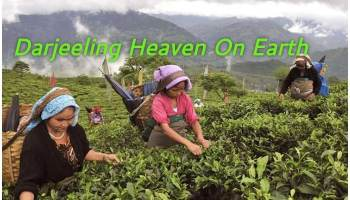 दार्जिलिंग में कहां घूमें, दार्जिलिंग हिल स्टेशन, Must Visit Darjeeling , Darjeeling Hill Station , Beauty Of Darjeeling