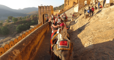 Elephant ride resumes in Amer Mahal