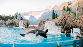 Best SeaWorld Instagram captions