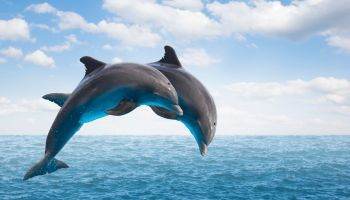 where to swim with dolphins in Puerto Rico featured image