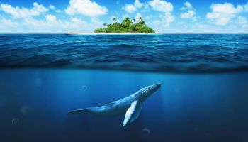 where to go whale watching in Maui featured image