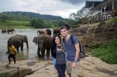 Elefanti Pinnawala2