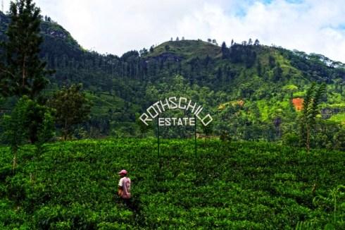 Piantagioni Sri Lanka