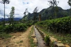 Piantagioni Sri Lanka 2