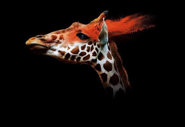 ZOOM torino Giraffa
