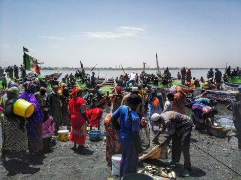 Mercato pescatori Saint Louis 3