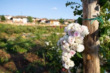 Giardino delle rose Ronzone - 0007