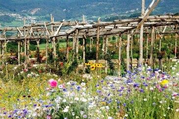 Rose Garden Ronzone