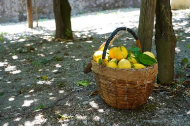 LEMON TOUR AMALFI (4)
