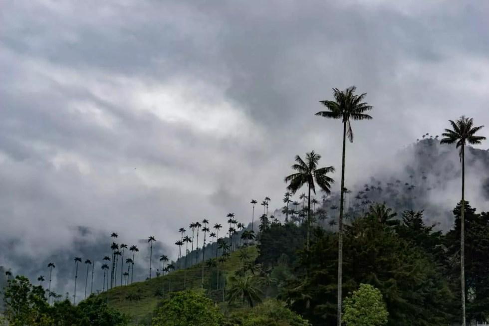 Salento Valle de Cocora