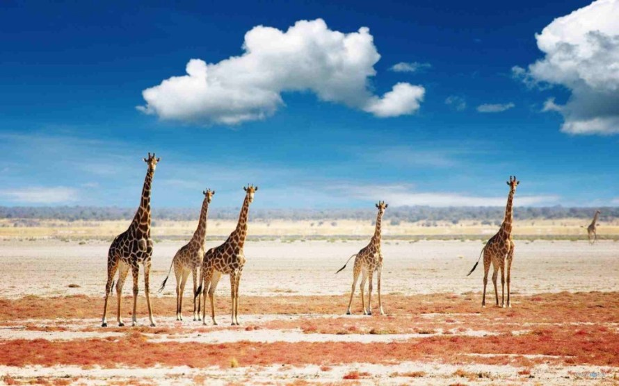 cheap flights to tanzania, direct flights to tanzania, last minute flights to tanzania, tanzania safari, last minute flights to tanzania
