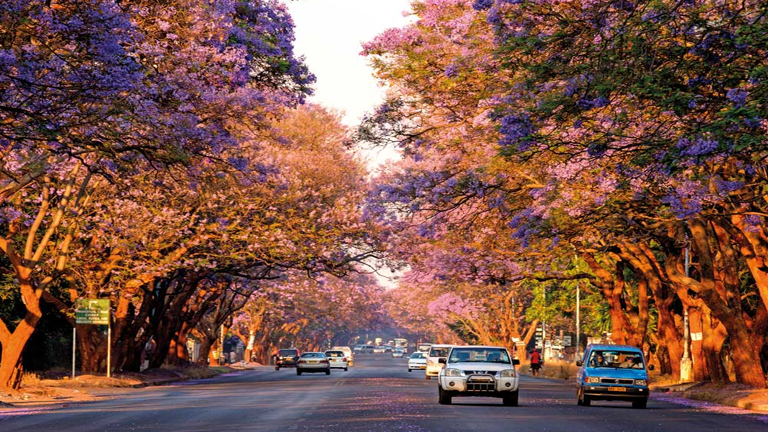 cheap flights to harare