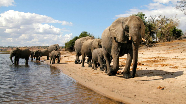 Chobe National Park, TravelLineUk