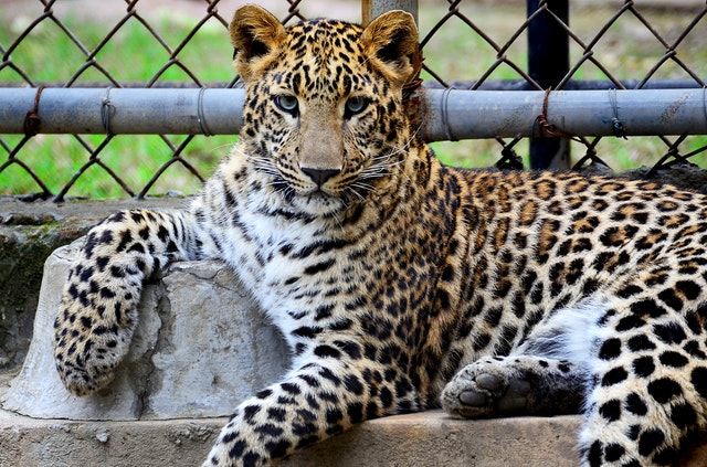 Mysore Zoo, Best Places To Visit in Mysore
