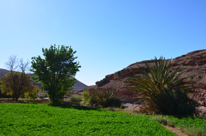 The Almond Groves around Kasbah Ellouze