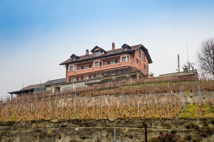 UNESCO vineyard, Lake Leman, Lake Geneva, Domaine Croix Duplex, Lausanne, Switzerland