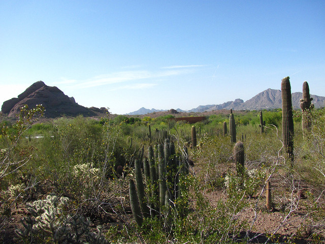phoenix, arizona, america, travelling book junkie, what to do, top things, to do, to see, where to go in, places to, botanical gardens, plants, cactus, desert, travel destinations,