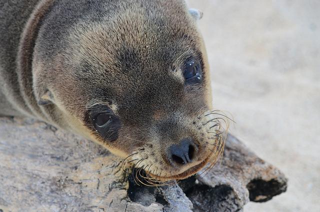 Galapagos Islands, Exotic Places, Wildlife, sea lion