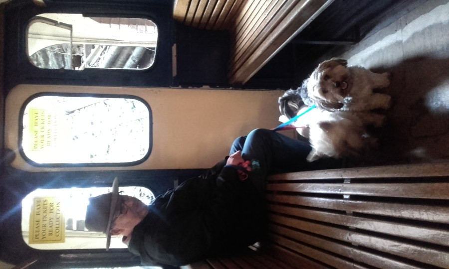 dogs on Bridgnorth cliff railway