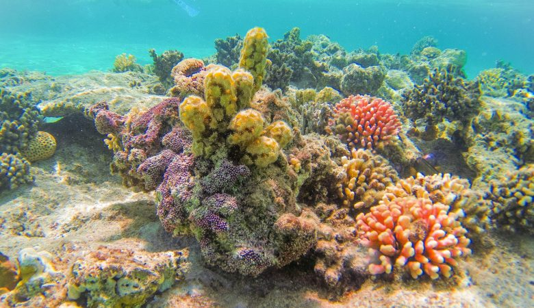 Red Sea - Coral Reef