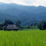 Hill Tribes & Moonshine – Mae Hong Son Trekking