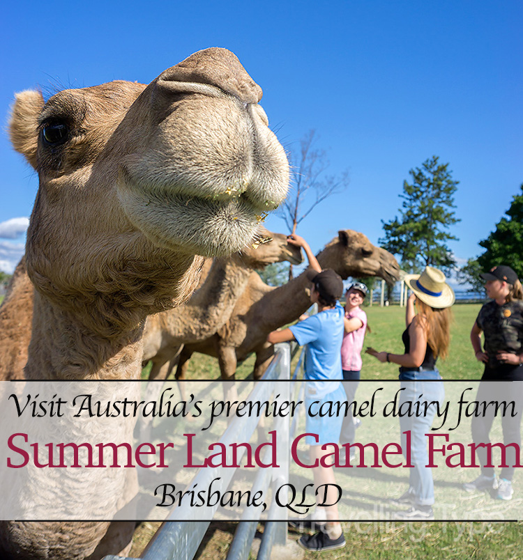 Summer Land Camel Farm