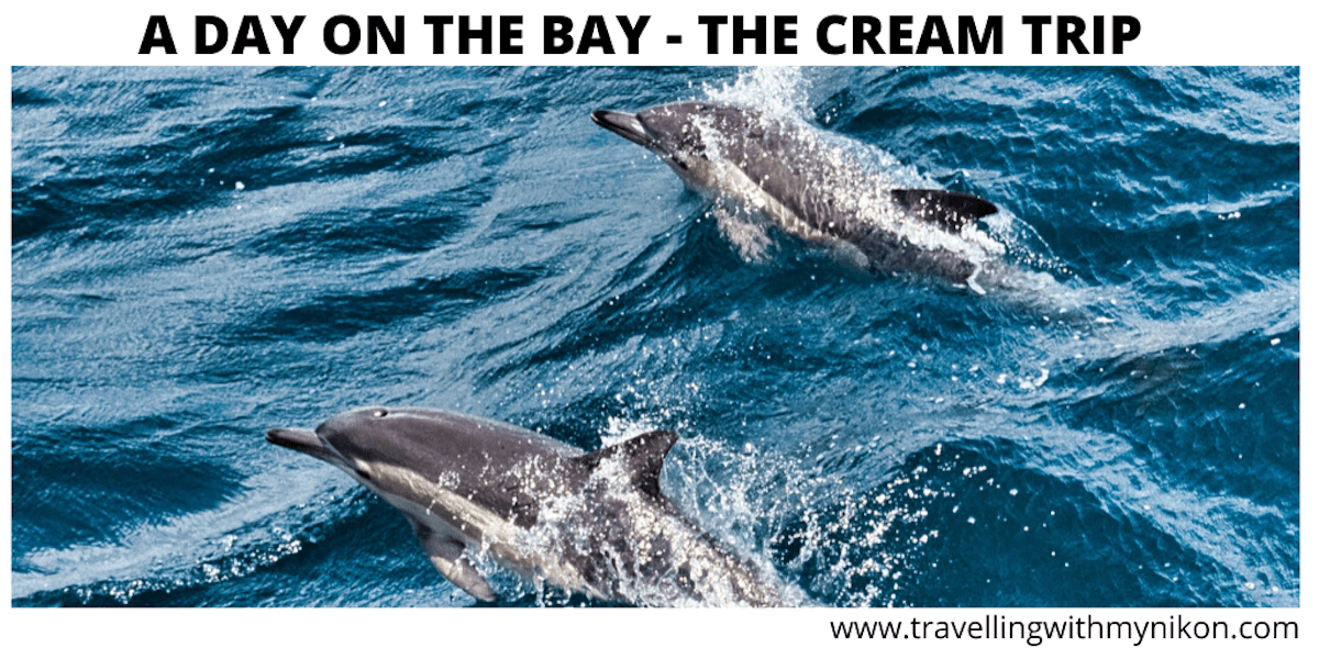 A DAY ON THE BAY IN NEW ZEALAND