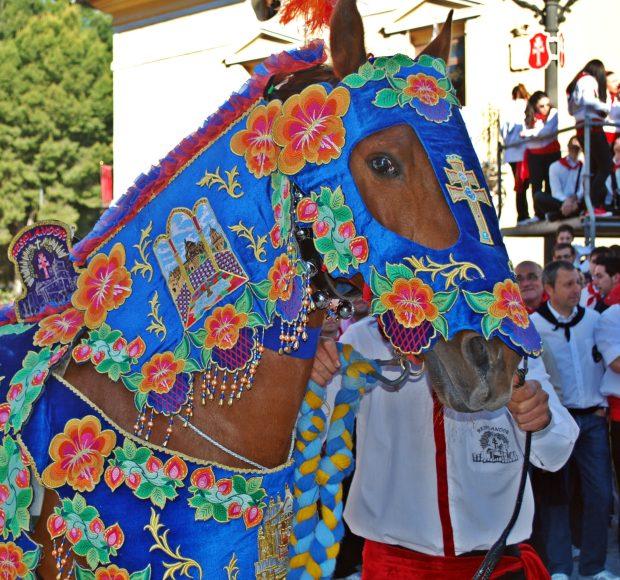 Horse Caravaca de la Cruz Murcia Spain